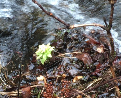 春の息吹!栃木県矢板市|秘湯、小滝鉱泉にて