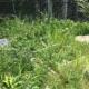 埼玉県川口市|不法投棄現場に遭遇しました by便利屋ハッピー