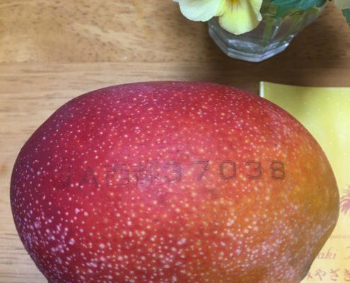 初物!宮崎産のマンゴー byベンリヤハッピー