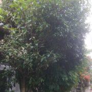 埼玉県川口市|伸びすぎた庭木の剪定・伐採と増えすぎた植木鉢処分 by便利屋ハッピー