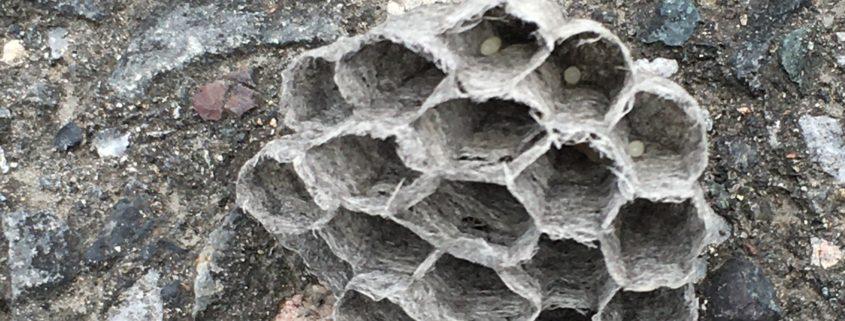 埼玉県川口市|トイレ窓にできたハチの巣の除去 by便利屋ハッピー