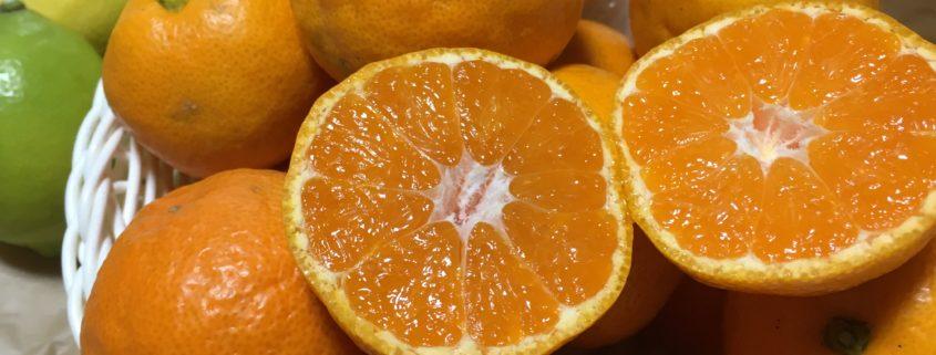 和歌山県紀州より|今年も、観音山みかんと皇室献上品の観音山レモンです