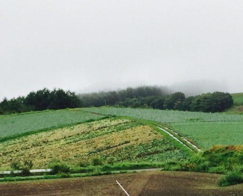 群馬県嬬恋村|一面のきゃべつ畑は圧巻です by便利屋ハッピー